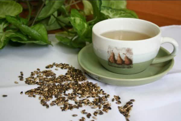 Лечебный чай из расторопши