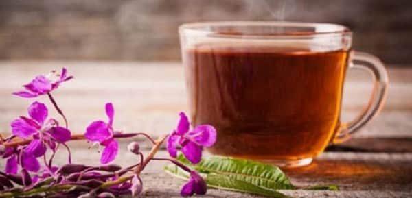 Иван чай лечебные свойства