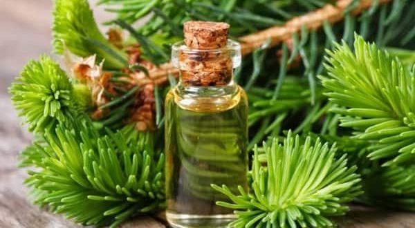 Кедровое масло лечебные свойства и применение