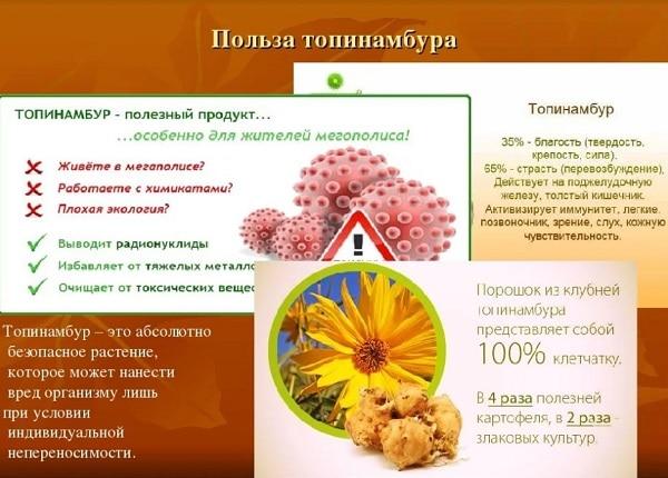 Топинамбур: полезные свойства и противопоказания