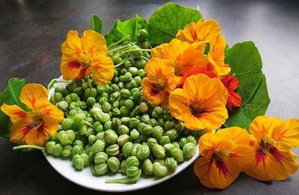 Цветы и бутоны настурции