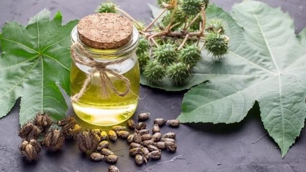 Касторовое масло для волос: применение