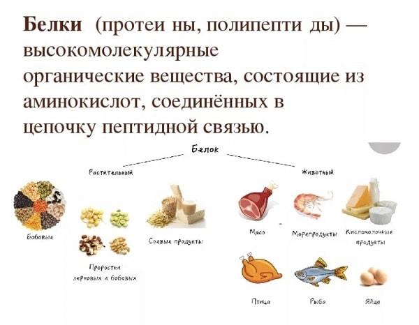 В каких продуктах содержится белок: таблица